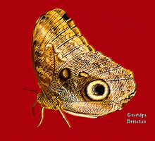 Butterfly by Tony Weatherman