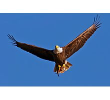 Bald Eagle with Fish Photographic Print