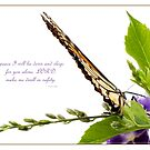 ~ Psalm 4:8 ~ by Donna Keevers Driver