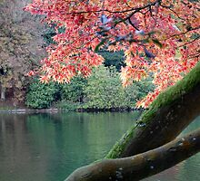 Autumn at Stourhead by Fiona Gardner