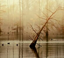 Morning on the Bayou  by Michelle  Morris