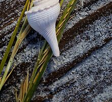 Shell and Sea Grass on Beach by jimcrotty
