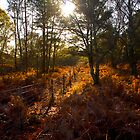 Dunwich Heath Forest Scene Suffolk by Darren Burroughs