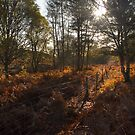 Dunwich Heath Woodland Scene by Darren Burroughs