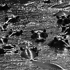 Hippos in the pool by Tweety300