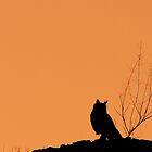 Nocturnal by Rashid Latiff