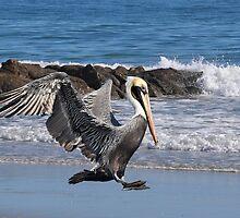 Smooth Landing by Kathy Baccari