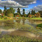 Auchlochan Loch by Tom Gomez