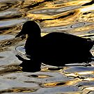 Silky Duck by relayer51