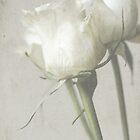 white roses by Iris Lehnhardt
