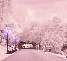 Soft Light on the Path by digitalmidge