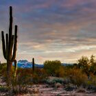 A Sonoran Desert Morning  by Saija  Lehtonen