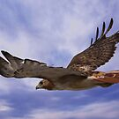 Red Tailed Hawk by Gregg Williams