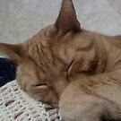 Sleeping Ozzie by maggiepoohbear