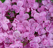 Purple Hydrangea by Angela Gannicott