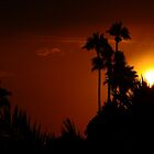 Sunset over the palms by Cleber Design Photo