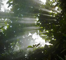 Sun rays of light through the trees, Adelaide Botanic Gardens by Elana Bailey