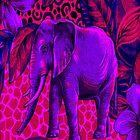 Elephant by yonni
