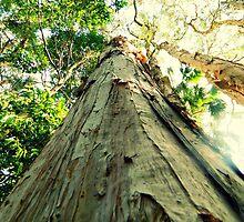 Tree Bark by Samantha Robinson