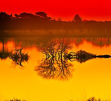 Studland Morning Gold by delros