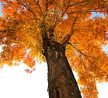 Autumn Glow by Sue  Cullumber