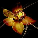 Golden Orchid by Mistyarts