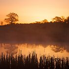 Misty Morning Sunrise by marktc