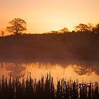 Misty Morning Sunrise by marktc
