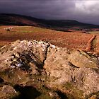 Cup & ring marked rock by nigelphoto
