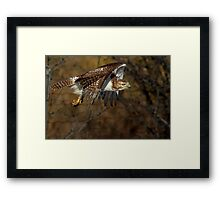 Red-tailed Hawk - Bullet Framed Print