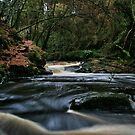 Clare Glens, Newport, Co Tipperary by John  Carey