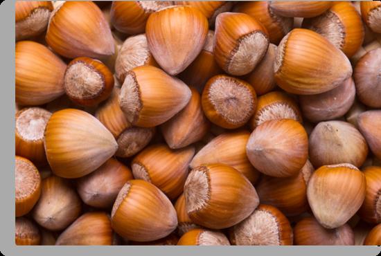 Hazelnuts by Gert Lavsen