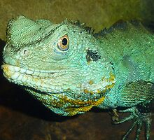 Chinese Water Dragon by PollyBrown