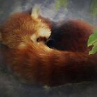 Red Panda by Carol Bleasdale
