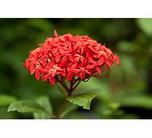 Summer red flower on background of green leaves Photographic Print