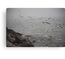 A flock of Seagulls feeding Canvas Print