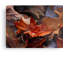 Still Autumn ! Metal Print
