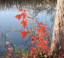 MAPLE SEEDLING, CYPRESS AND CREEK by May Lattanzio