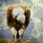 Vulture by Carol Bleasdale