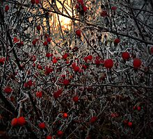 Rosehips and Frost by Charles & Patricia   Harkins ~ Picture Oregon