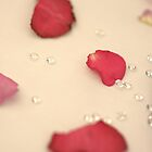 rose petals by Sandy Maya Matzen