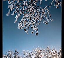 winter knit by nadia romanova