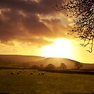 Golden Sheep by sammythor