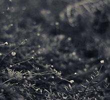 Undergrowth by Melissa Drummond