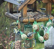 Small Birds with Big Appetites by missmoneypenny