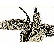 Crumpled Chili Photographic Print