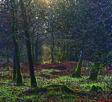 Woodland Light by VoluntaryRanger