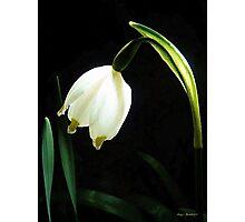 Snowflake Flower Photographic Print