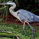 Heron in greenery by ♥⊱ B. Randi Bailey