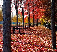 Autumn in Brooklyn, Connecticut by Alberto  DeJesus